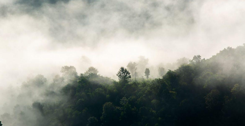 Waldbaden - Die Heilkraft des Waldes O. Mag